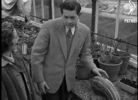 Regele Mihai 1953 sera